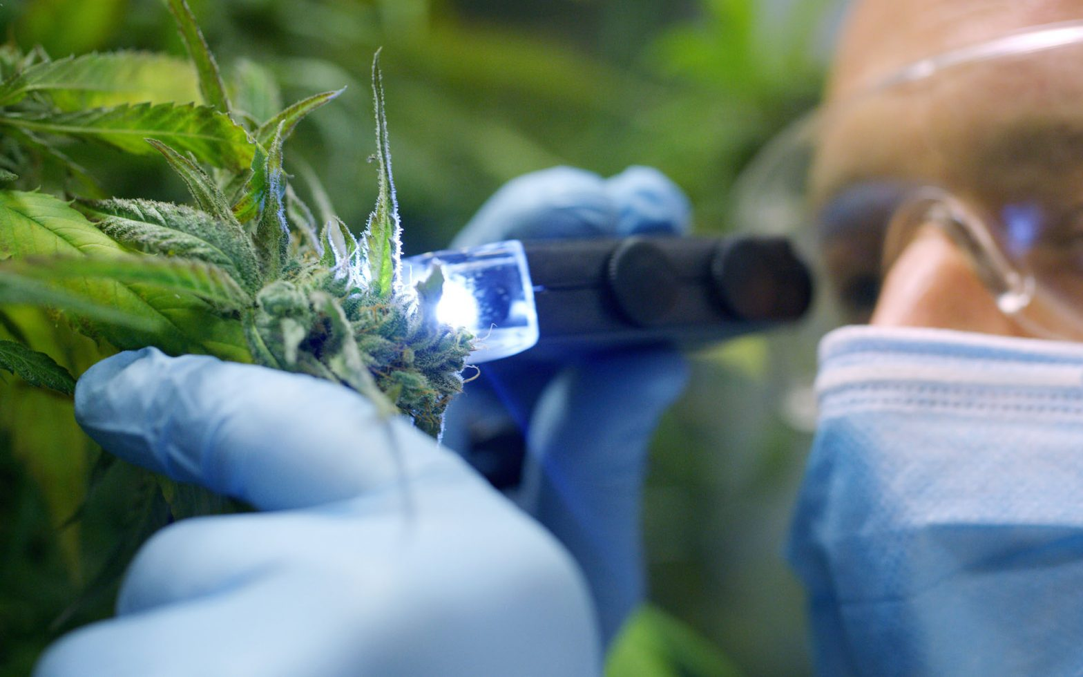 Reasons Why You Should Go For Full Spectrum CBD Botanical Blends